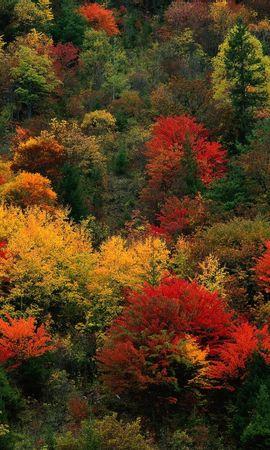 8109 скачать обои Растения, Пейзаж, Природа, Деревья - заставки и картинки бесплатно
