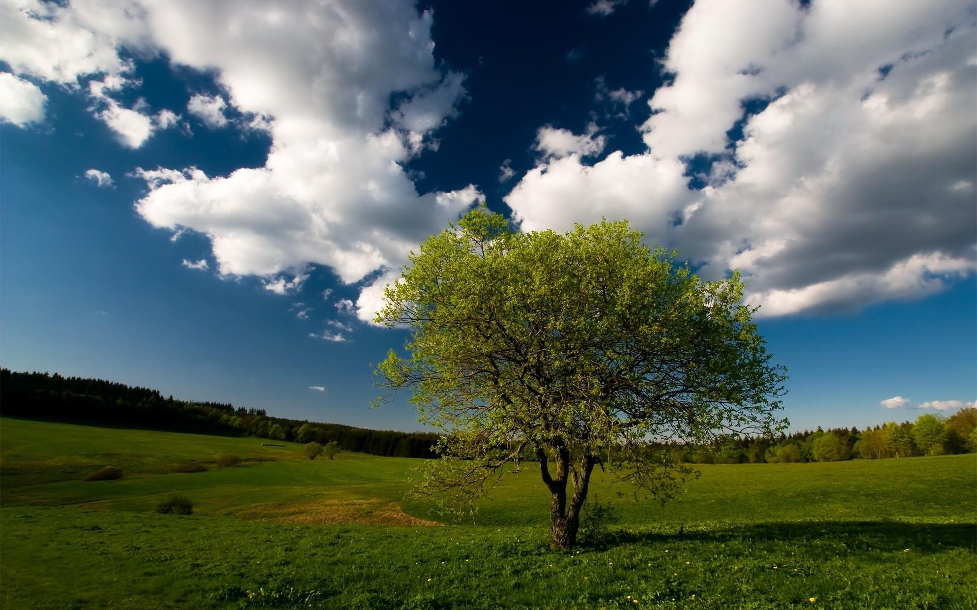 3104 скачать обои Пейзаж, Деревья, Небо - заставки и картинки бесплатно