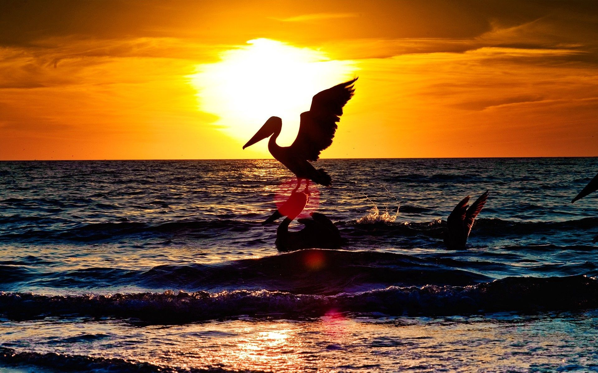 141961 download wallpaper Animals, Pelican, Stork, Sea, Flight, Sunset, Landscape screensavers and pictures for free