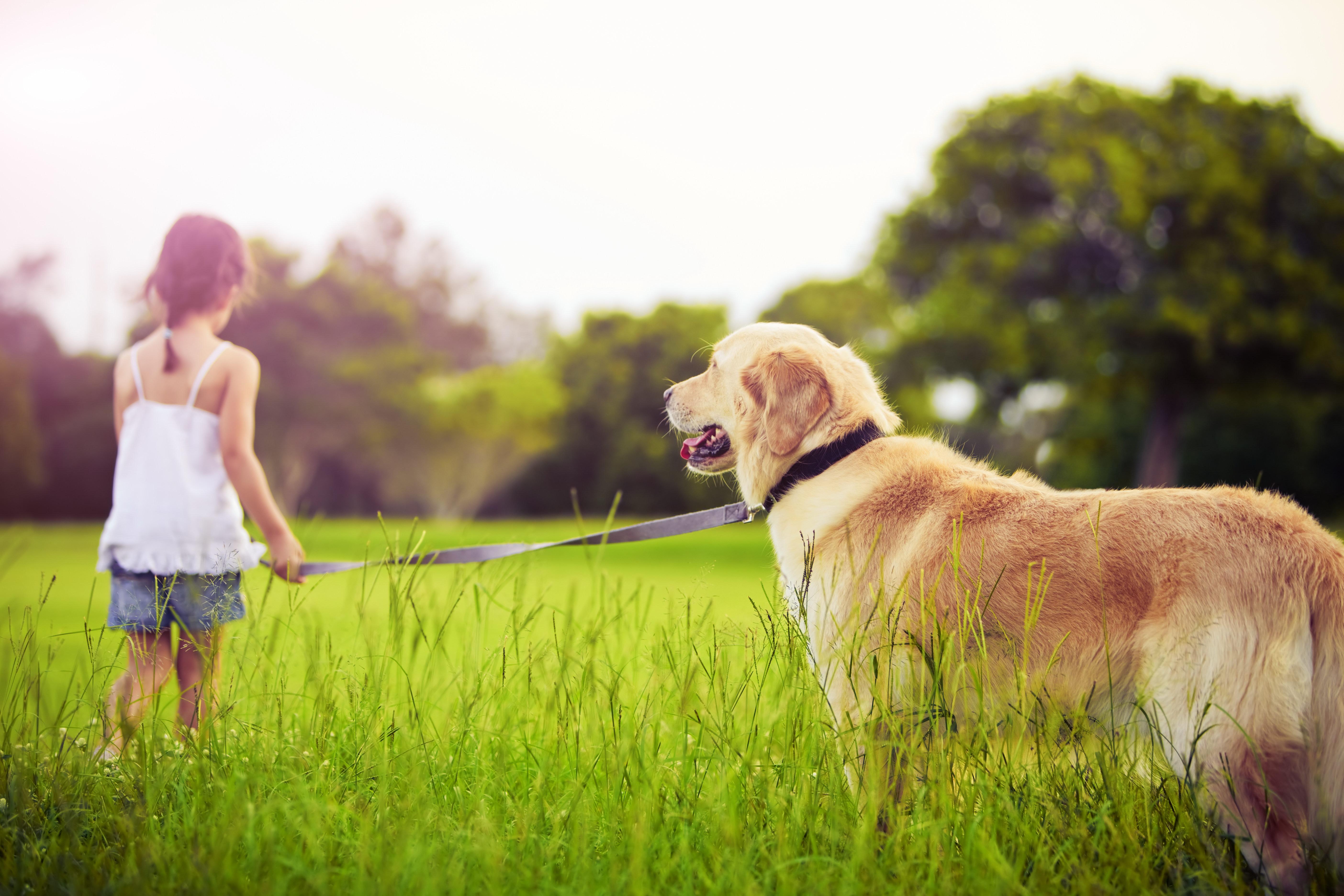83093 скачать обои Разное, Девочка, Поводок, Собака, Прогулка, Трава, Парк - заставки и картинки бесплатно
