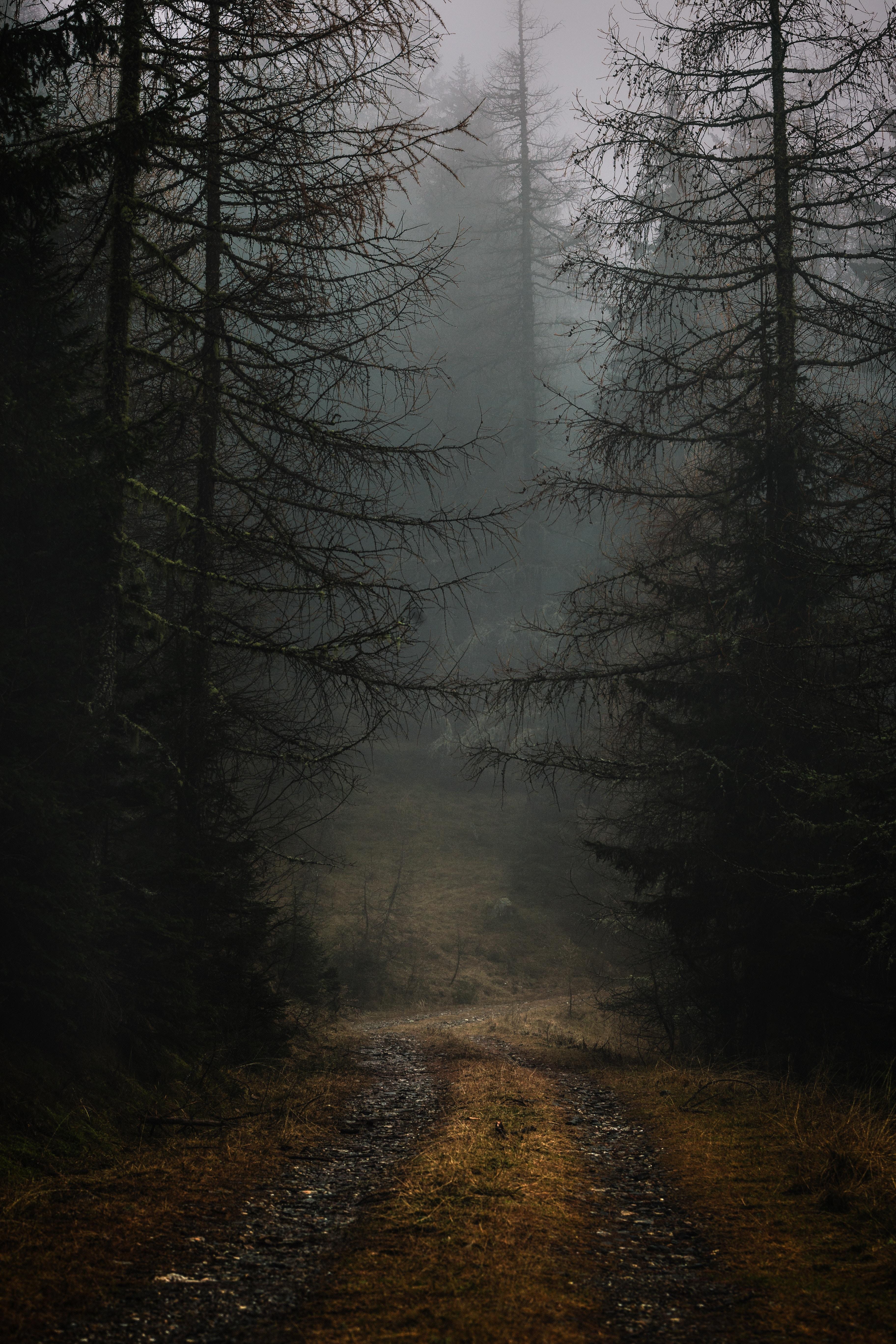 54139 скачать обои Лес, Ветки, Мрачный, Природа, Деревья, Осень, Туман, Тропинка - заставки и картинки бесплатно