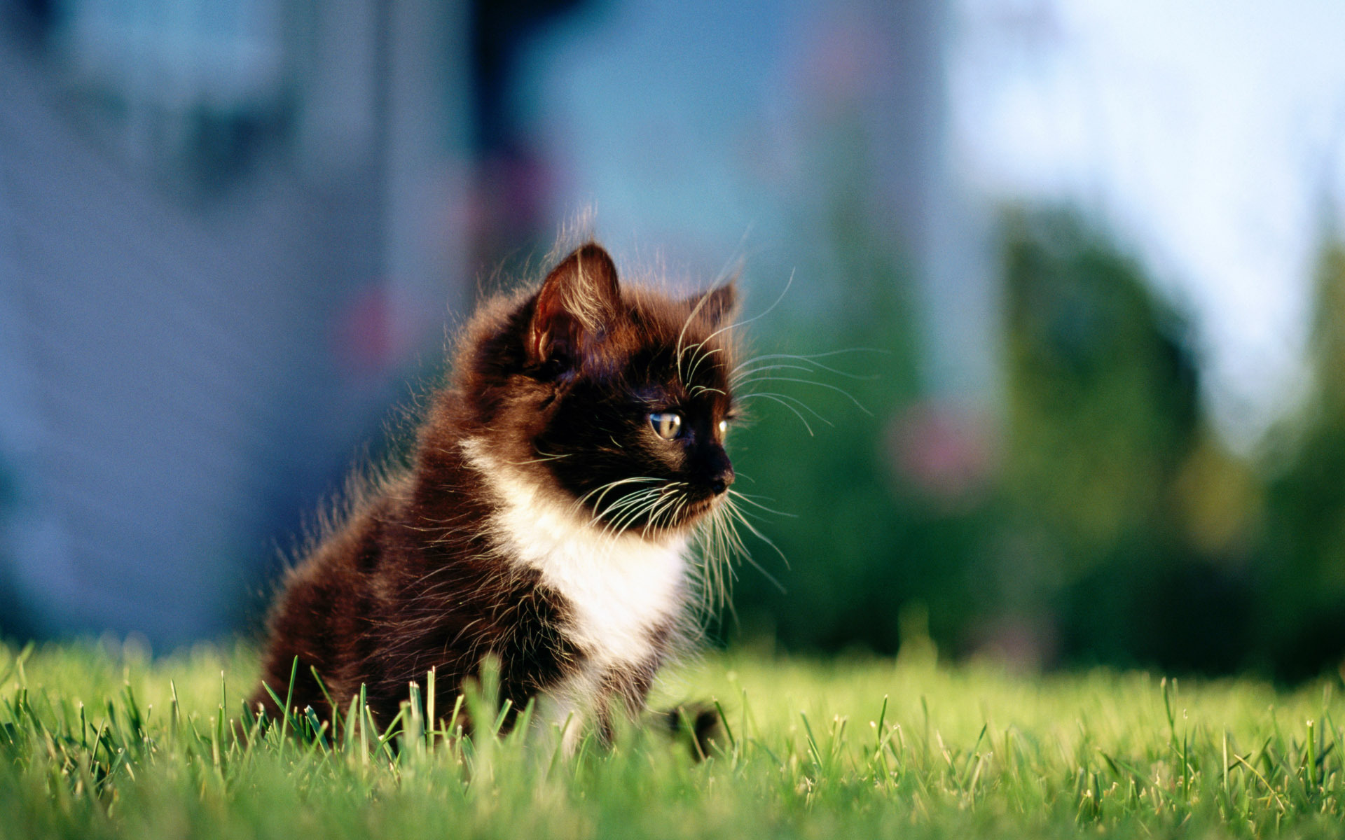 15348 download wallpaper Animals, Cats screensavers and pictures for free