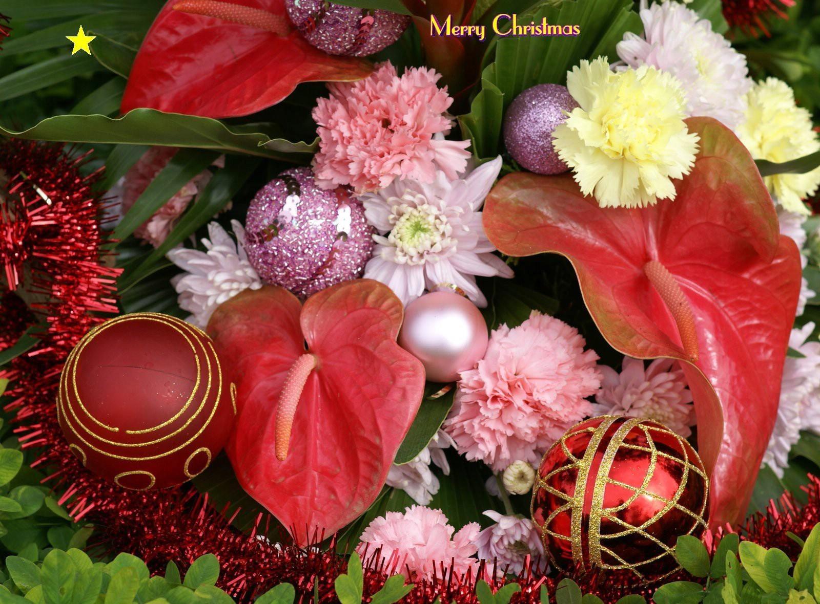 113259 Hintergrundbild herunterladen Feiertage, Weihnachten, Nelken, Grüne, Grünen, Inschrift, Weihnachtsschmuck, Weihnachtsbaum Spielzeug, Lametta, Anthurie, Anthurium - Bildschirmschoner und Bilder kostenlos