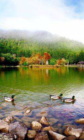 22613 download wallpaper Animals, Landscape, Birds, Trees, Ducks, Mountains, Lakes screensavers and pictures for free