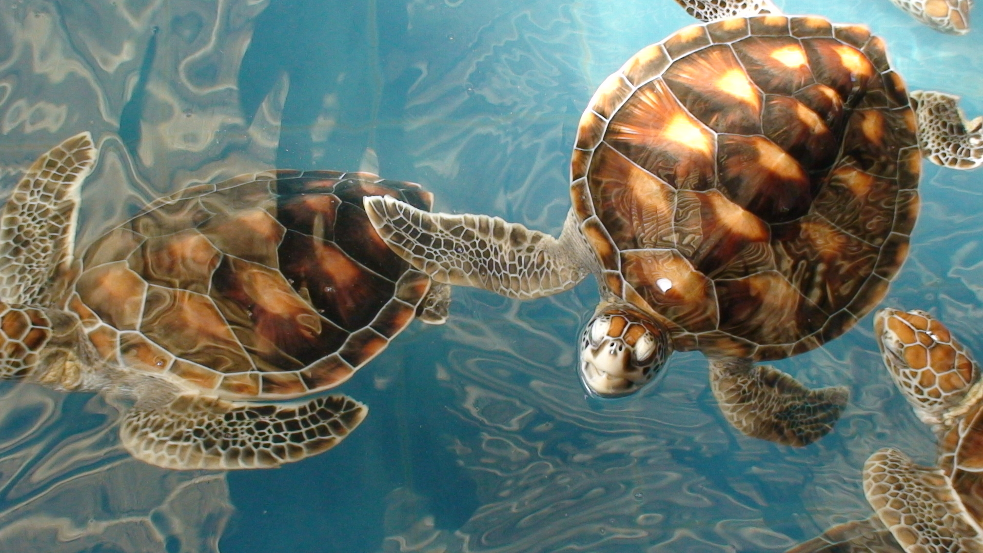 61985 download wallpaper Animals, Turtles, Sea, Underwater World, Lot screensavers and pictures for free