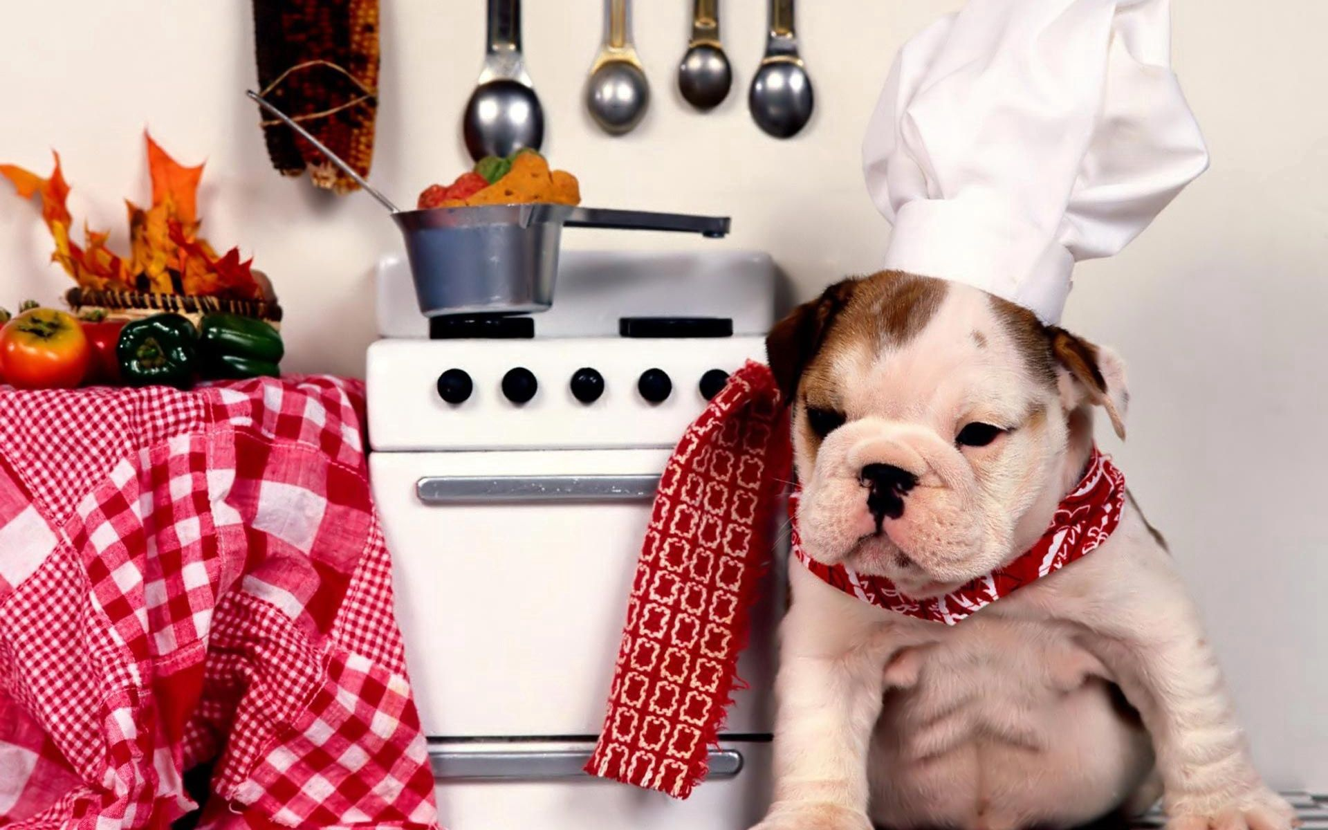 133333 download wallpaper Animals, Dog, Bulldog, Kitchen, Cook, Cap, Plate, Slab, Products, Groceries screensavers and pictures for free
