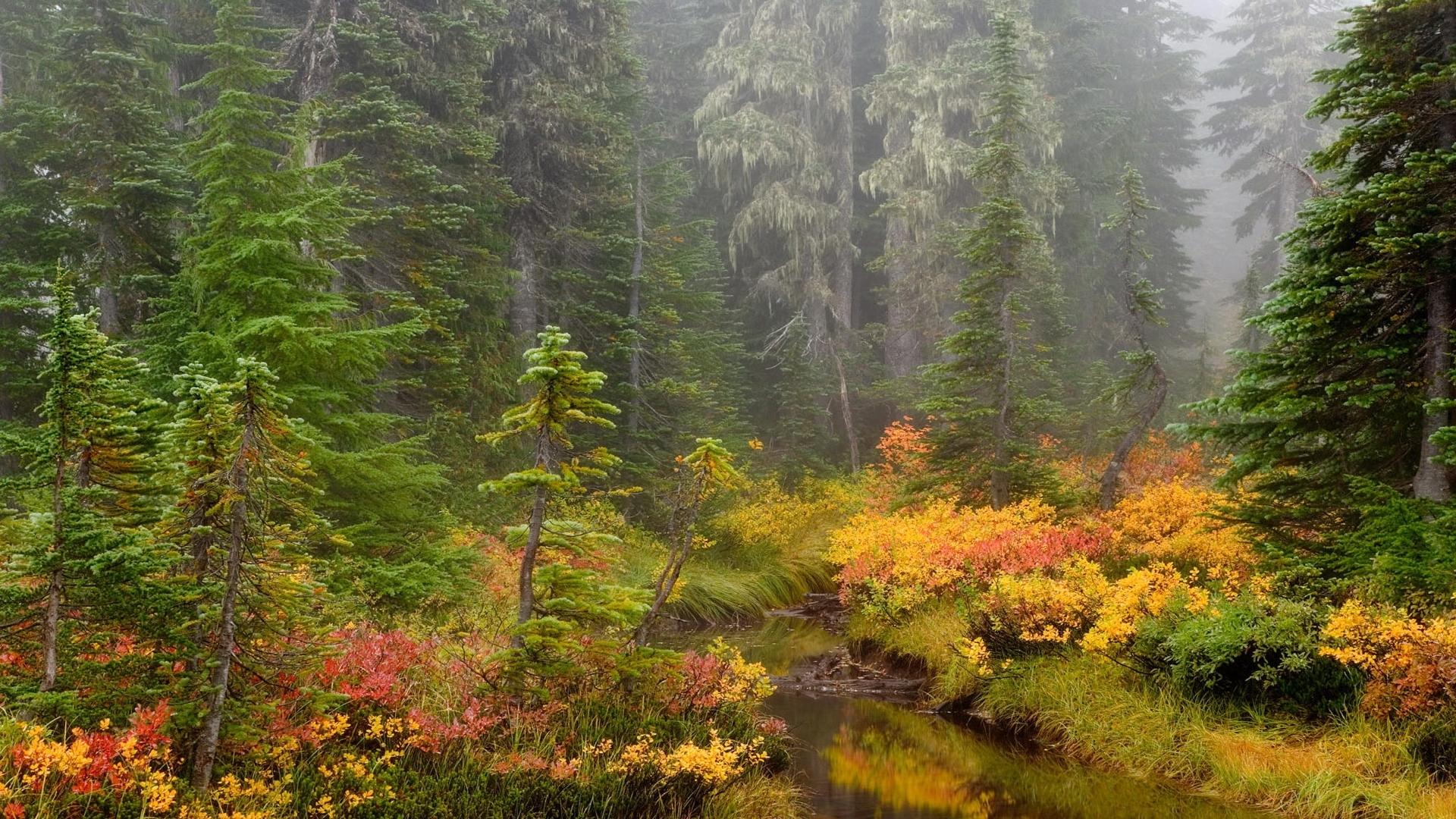 23316 скачать обои Пейзаж, Река, Деревья, Осень - заставки и картинки бесплатно