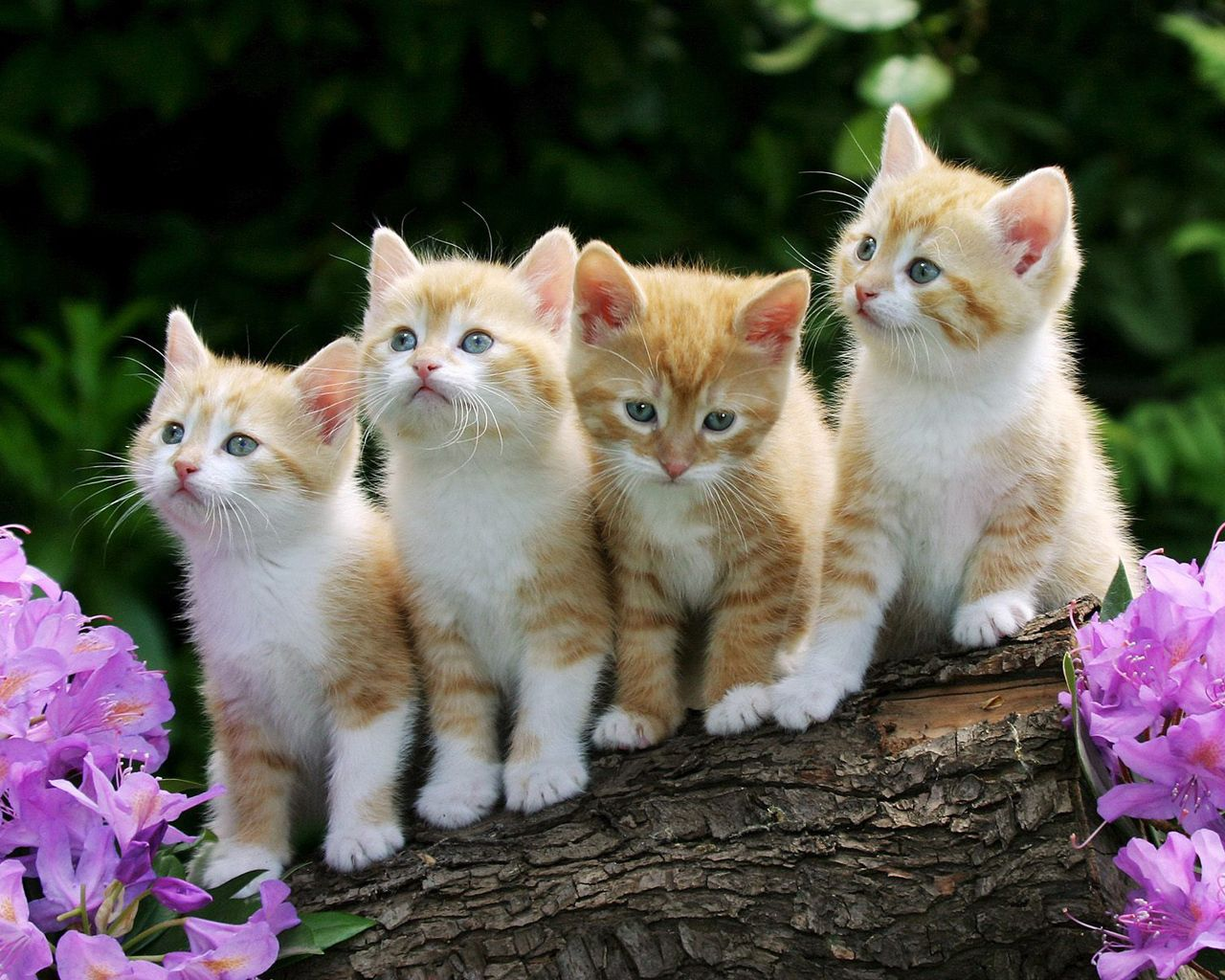 120731 Screensavers and Wallpapers Kittens for phone. Download Animals, Flowers, Fluffy, Beautiful, Kittens pictures for free