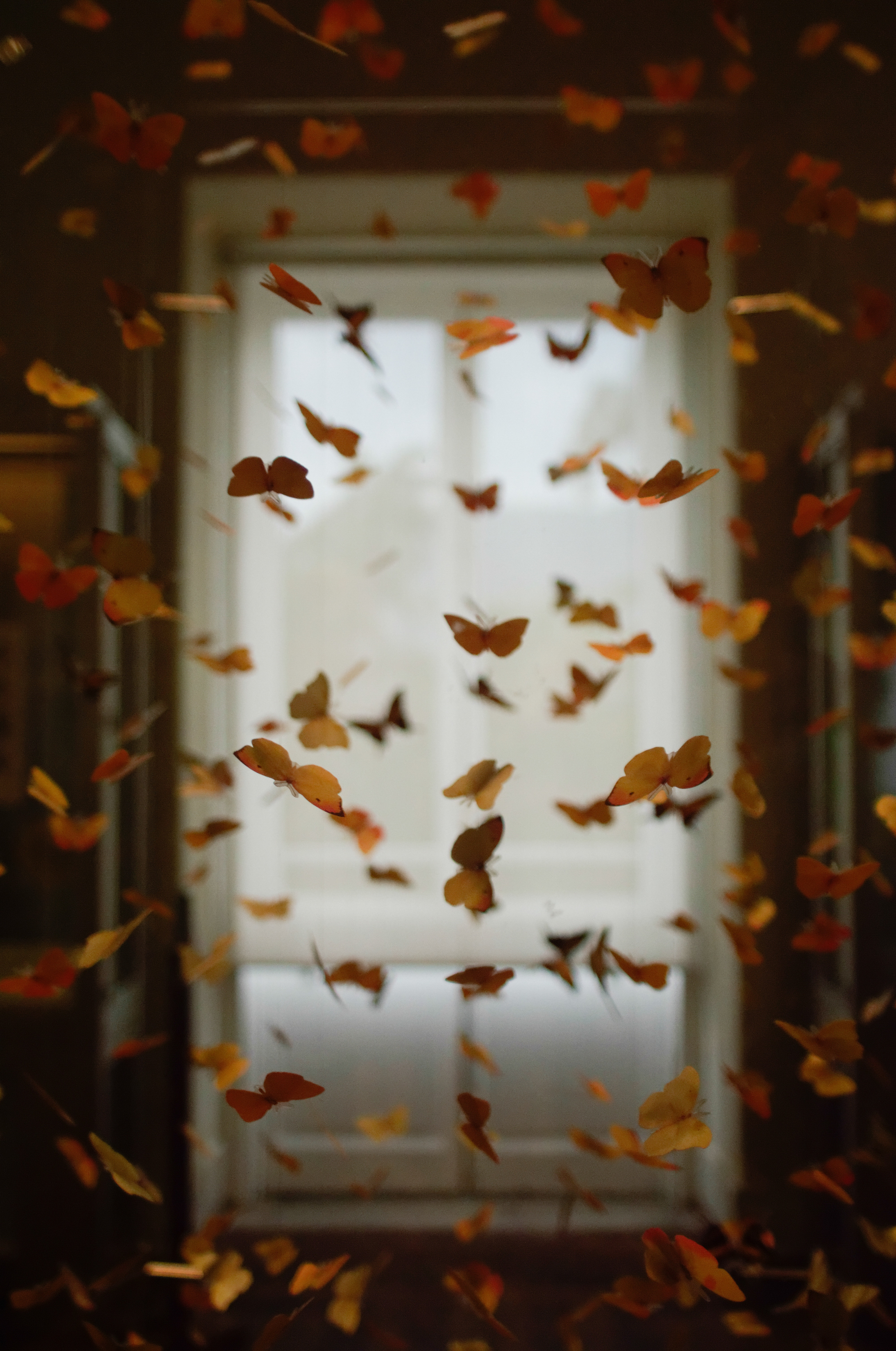 100226 Screensavers and Wallpapers Butterflies for phone. Download Miscellanea, Miscellaneous, Butterflies, Premises, Room, Decoration, Registration, Typography, Blur, Smooth pictures for free