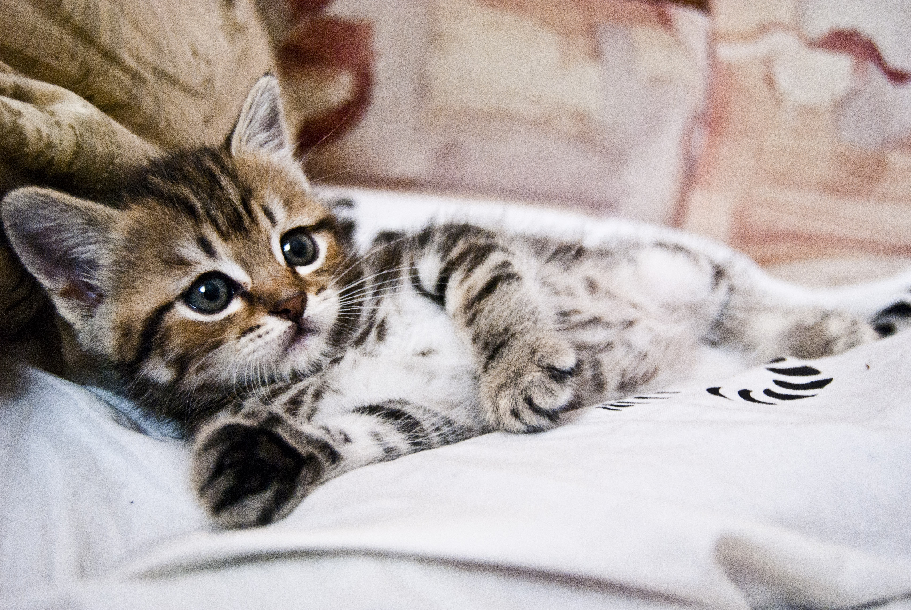 131356 download wallpaper Animals, Kitty, Kitten, Lies, Striped, Small, Nice, Sweetheart screensavers and pictures for free
