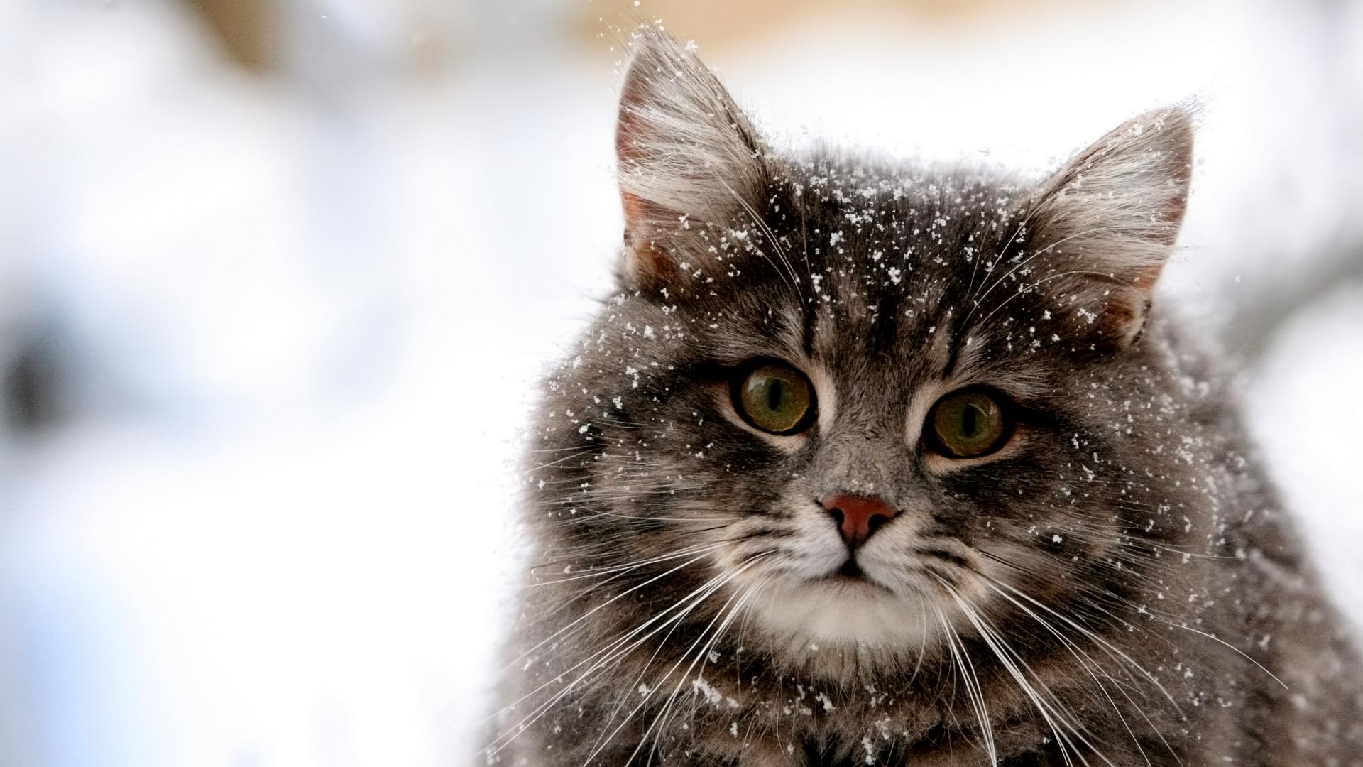 40303 download wallpaper Animals, Cats screensavers and pictures for free