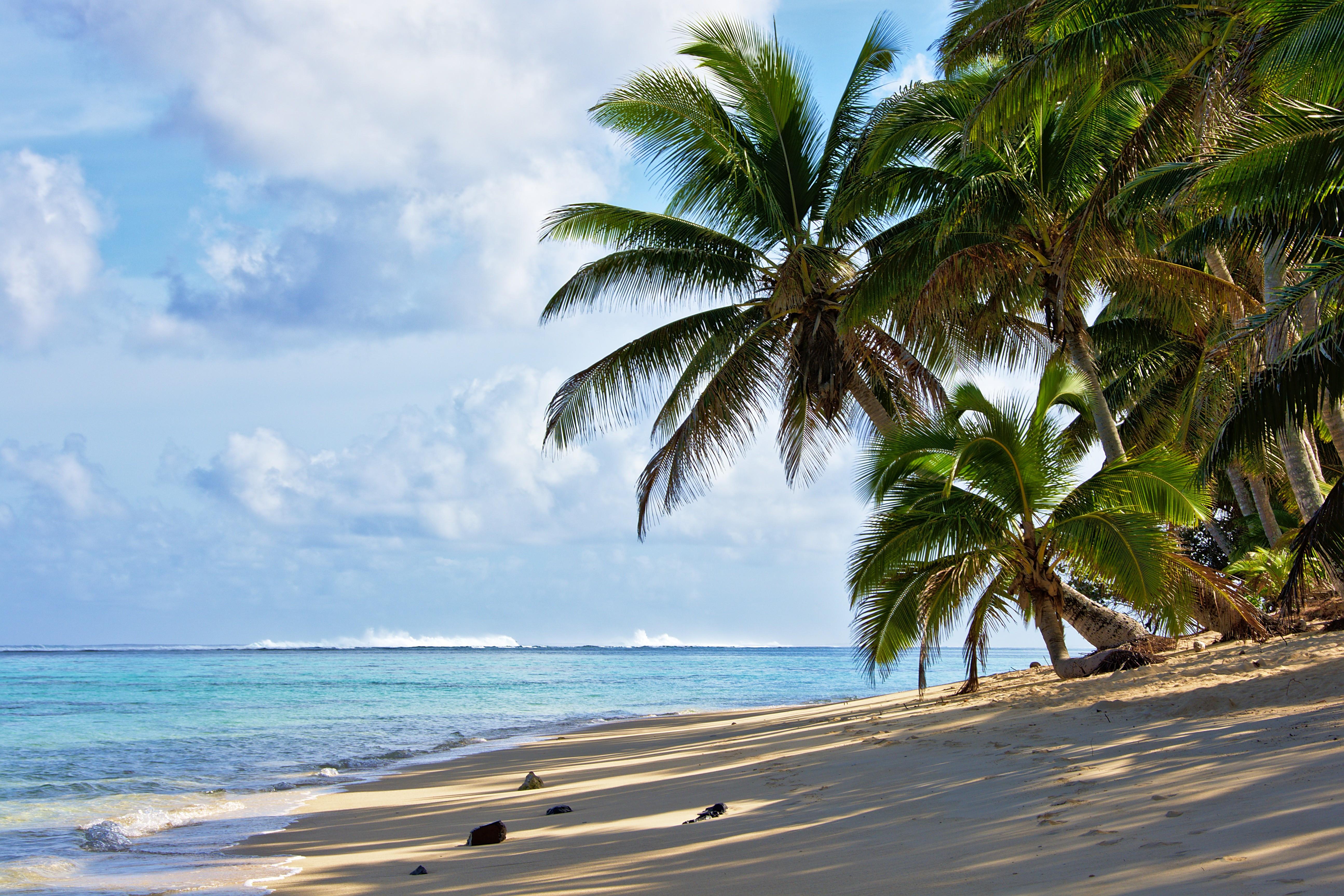 130976 скачать обои Природа, Море, Пляж, Пальмы, Побережье - заставки и картинки бесплатно