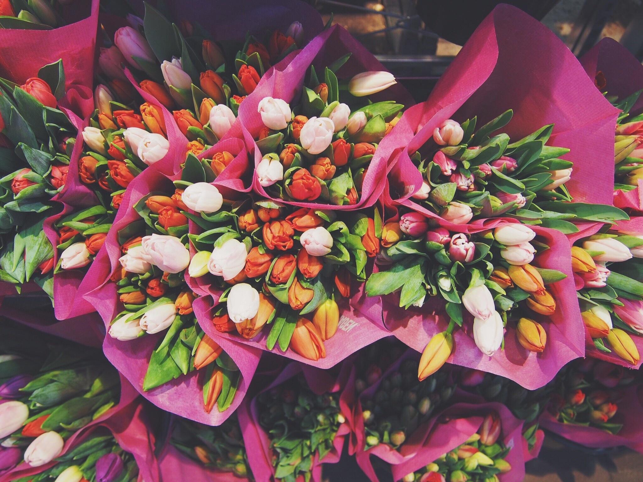 117822 télécharger le fond d'écran Fleurs, Tulipes, Bouquets - économiseurs d'écran et images gratuitement