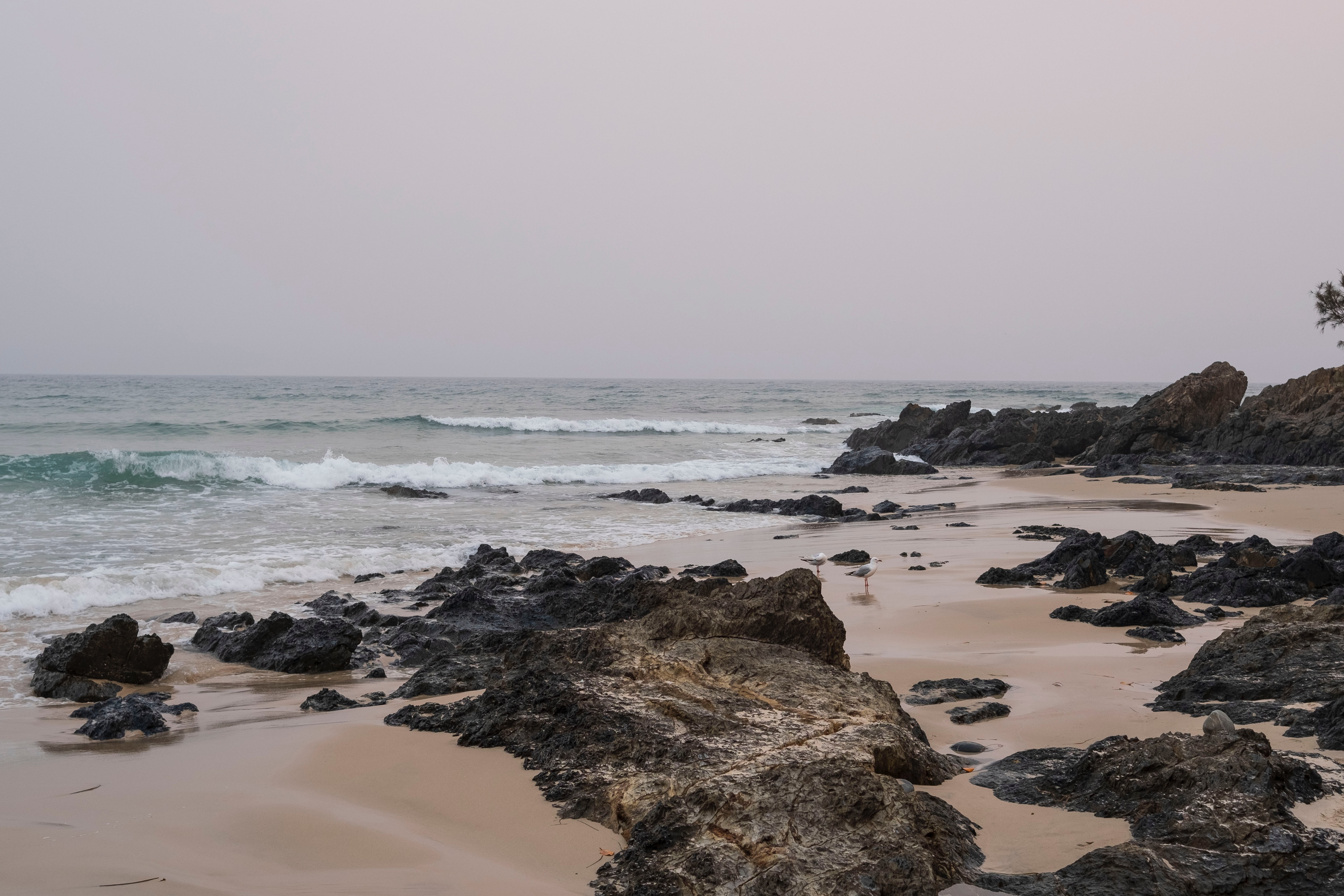 151773 download wallpaper Nature, Beach, Rocks, Waves, Birds, Seagulls screensavers and pictures for free