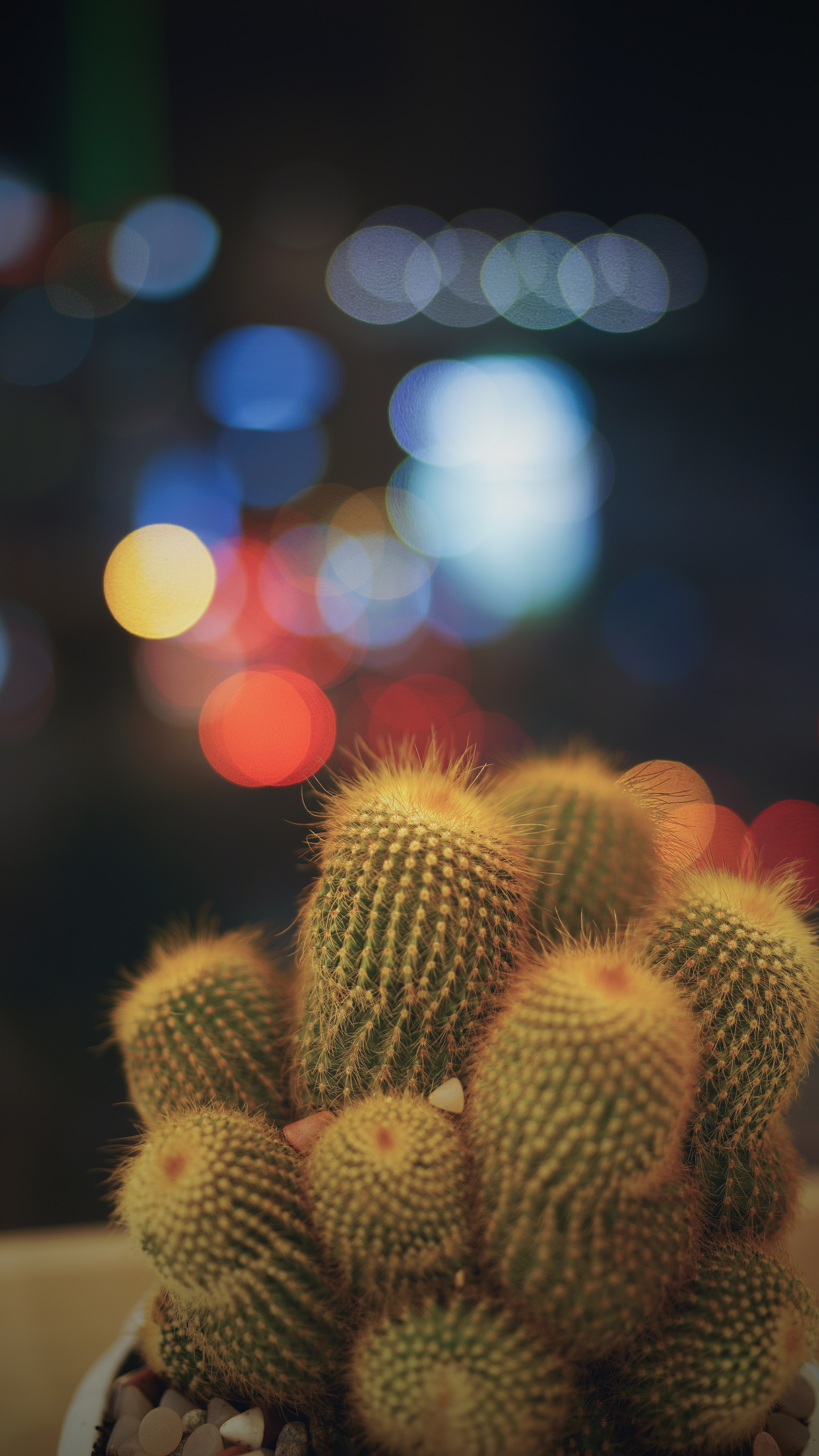 67418 download wallpaper Cactuses, Flowers, Glare, Barbed, Spiny, Bokeh, Boquet, Indoor Plant, Houseplant, Succulents screensavers and pictures for free