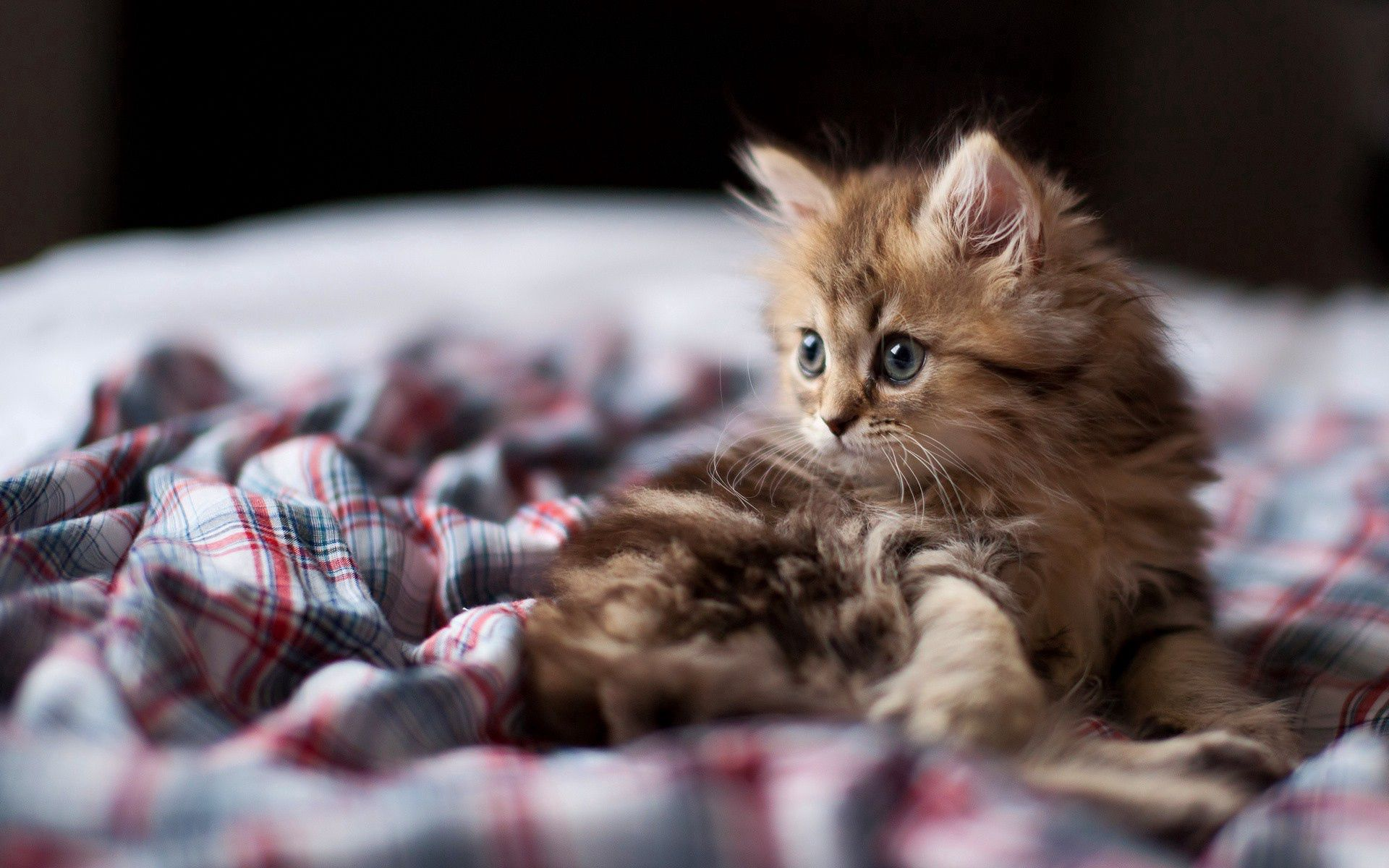 101365 Screensavers and Wallpapers Kitten for phone. Download Animals, Fluffy, Kitty, Kitten, Sight, Opinion pictures for free