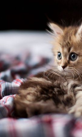 101365 download wallpaper Animals, Kitty, Kitten, Fluffy, Sight, Opinion screensavers and pictures for free