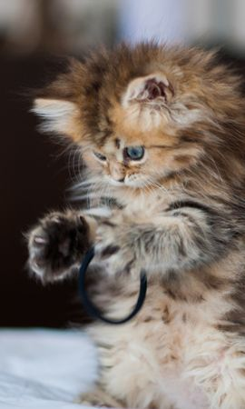 21554 download wallpaper Animals, Cats screensavers and pictures for free