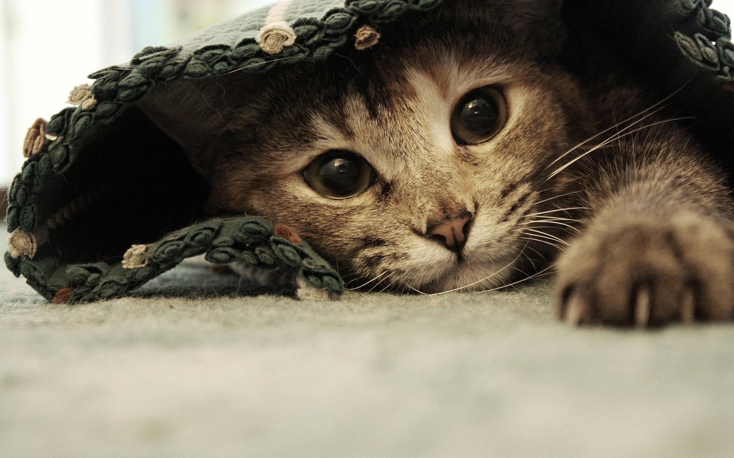 24848 скачать обои Животные, Кошки (Коты, Котики) - заставки и картинки бесплатно
