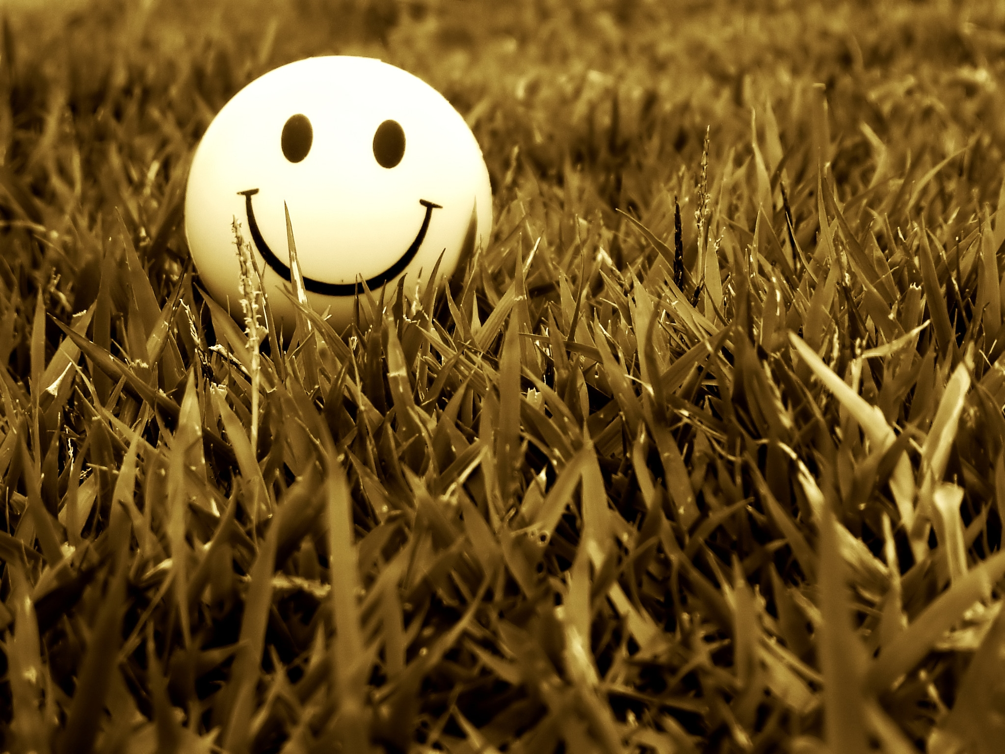 145393 Screensavers and Wallpapers Smile for phone. Download Grass, Miscellanea, Miscellaneous, Smile, Mood pictures for free