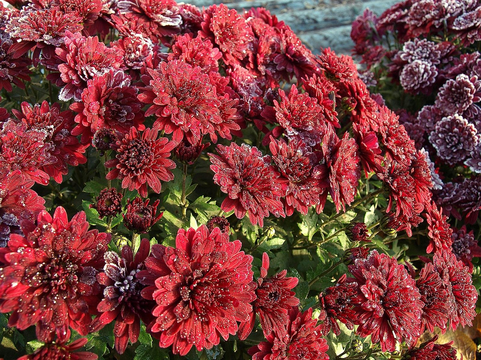9923 descargar fondo de pantalla Plantas, Flores: protectores de pantalla e imágenes gratis