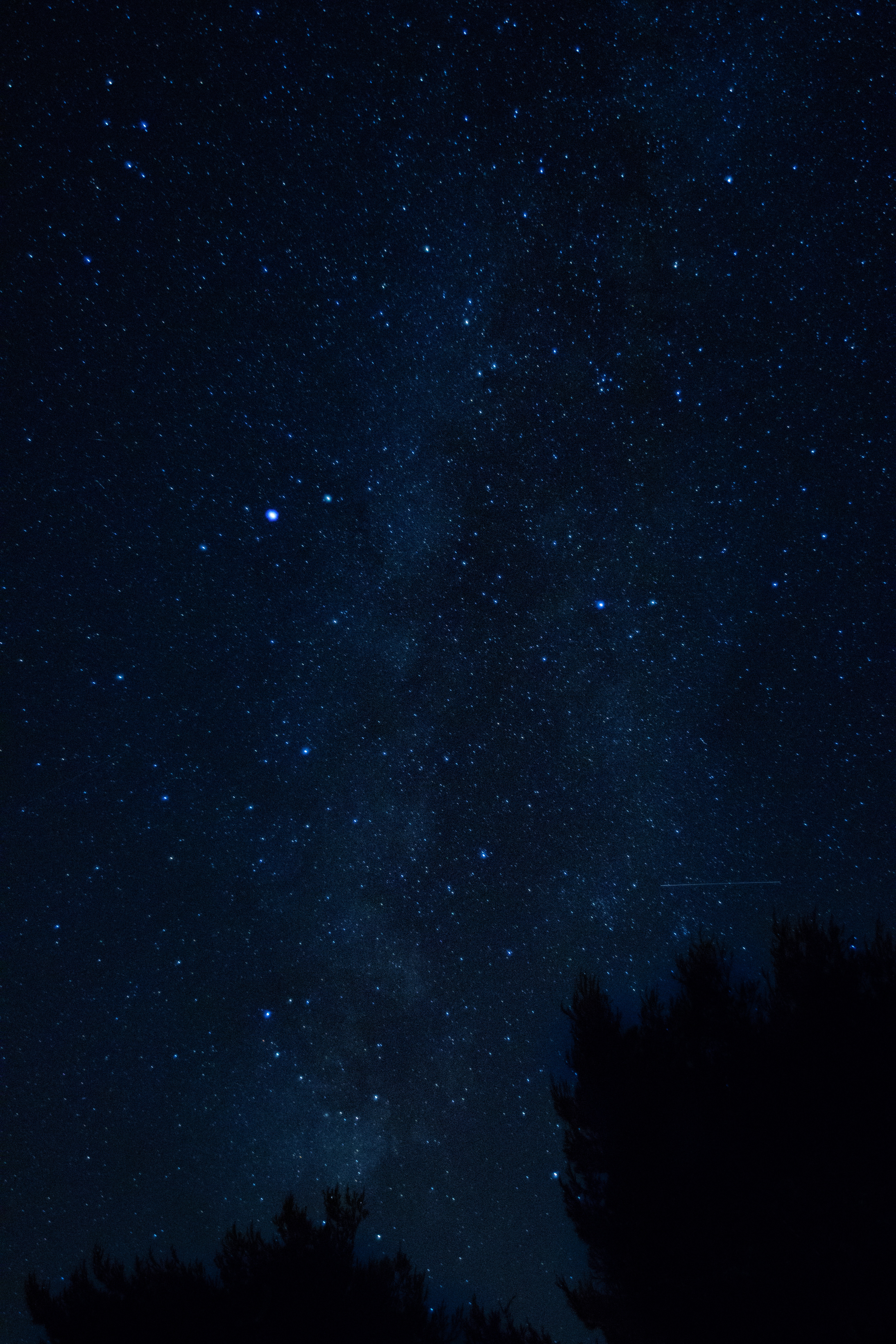 62881 download wallpaper Night, Nature, Trees, Starry Sky, Croatia screensavers and pictures for free
