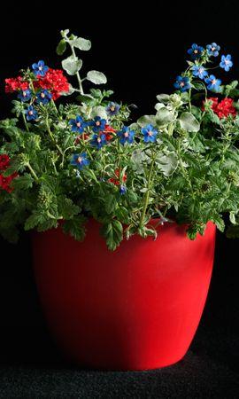 23402 скачать обои Растения, Цветы - заставки и картинки бесплатно