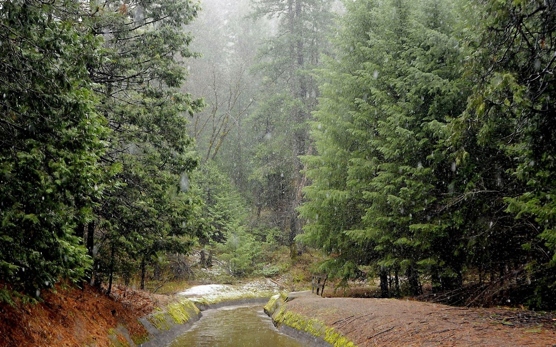120478 Screensavers and Wallpapers Rivers for phone. Download Rain, Nature, Rivers, Forest, Bad Weather pictures for free
