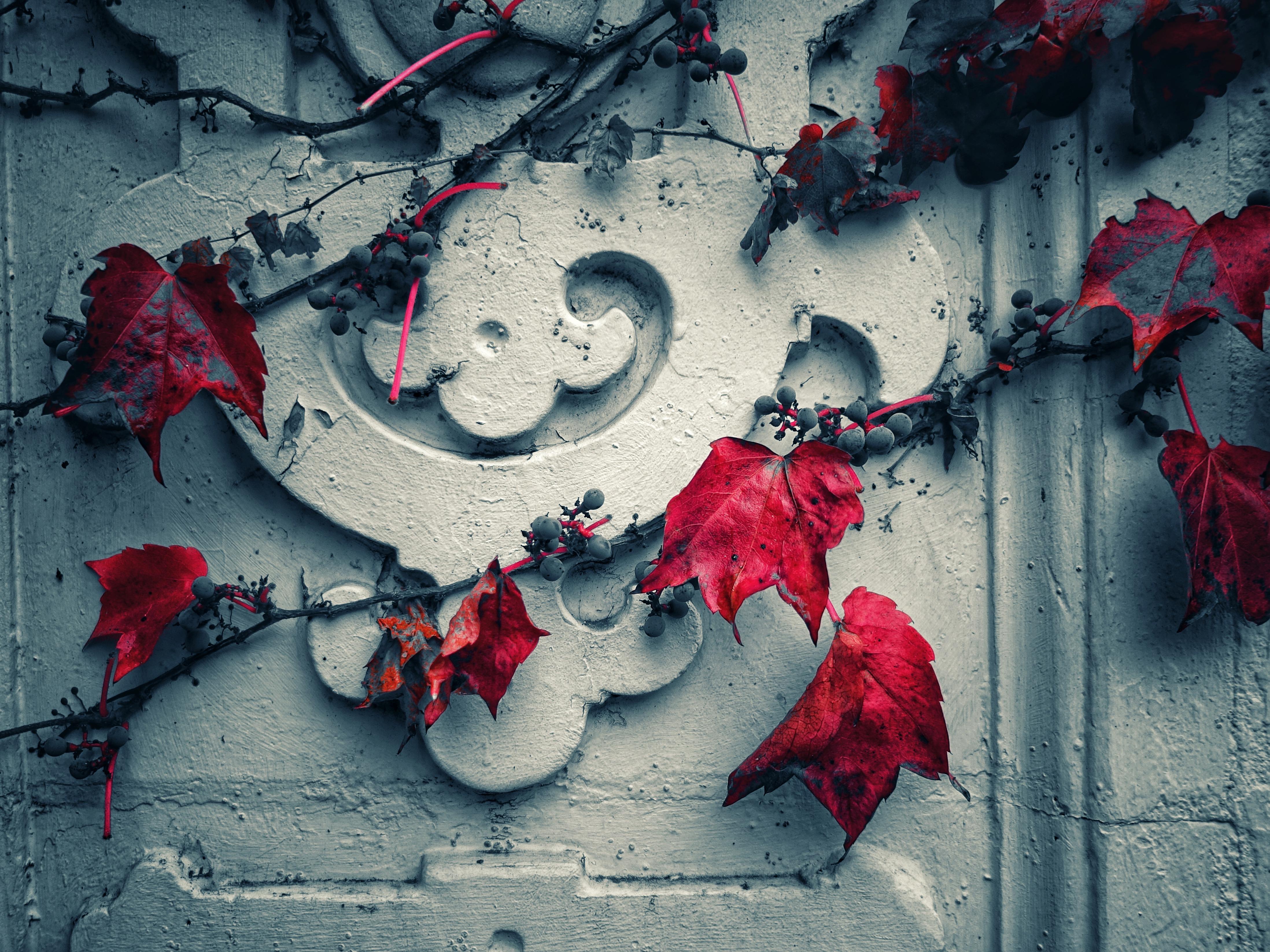 94633 Заставки и Обои Виноград на телефон. Скачать Разное, Листья, Виноград, Красный, Стена, Белый картинки бесплатно