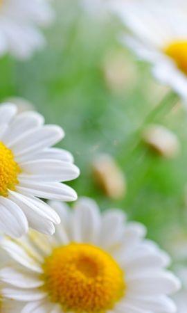 40988 télécharger le fond d'écran Plantes, Fleurs - économiseurs d'écran et images gratuitement