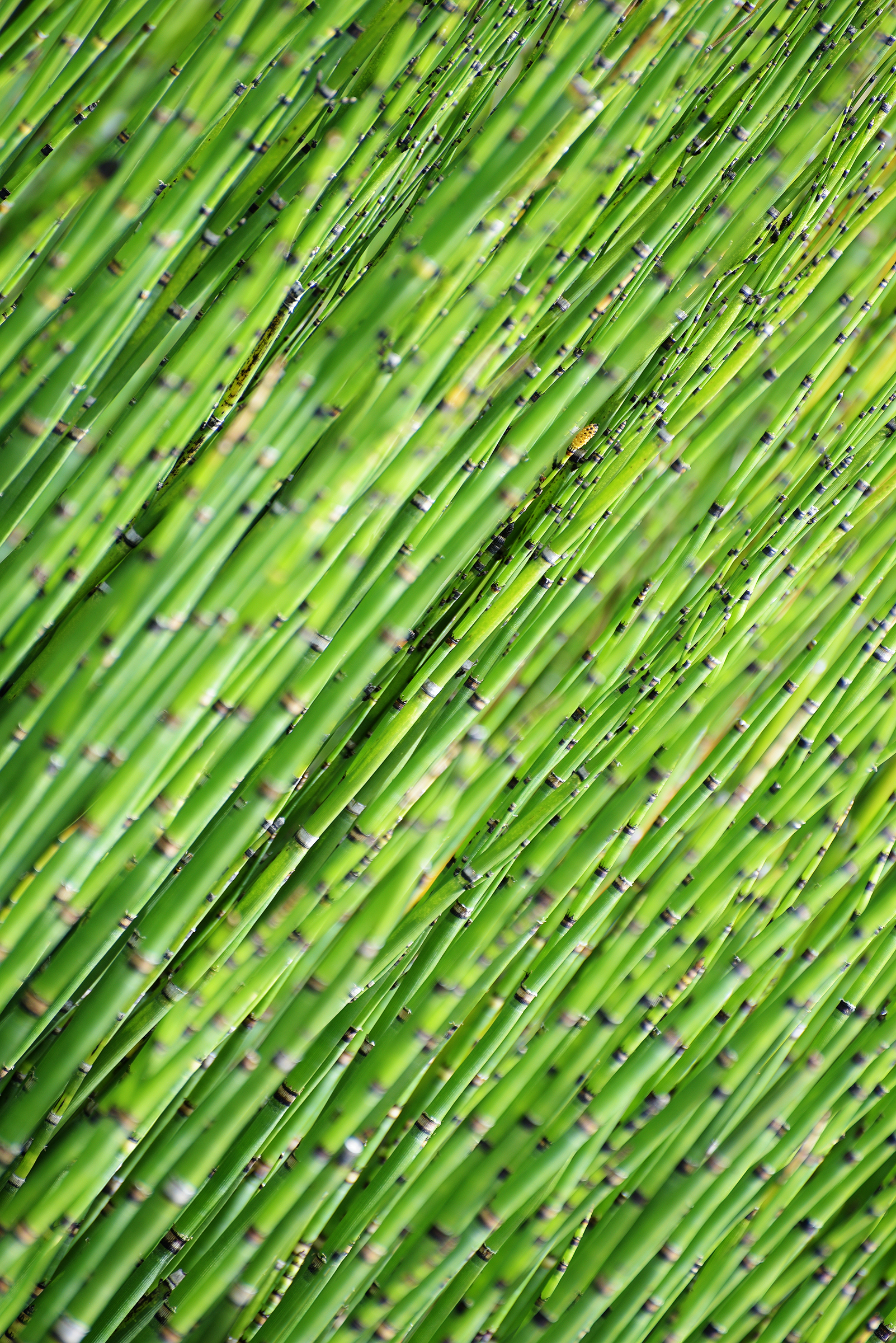 122019 download wallpaper Nature, Bamboo, Wood, Tree, Focus screensavers and pictures for free