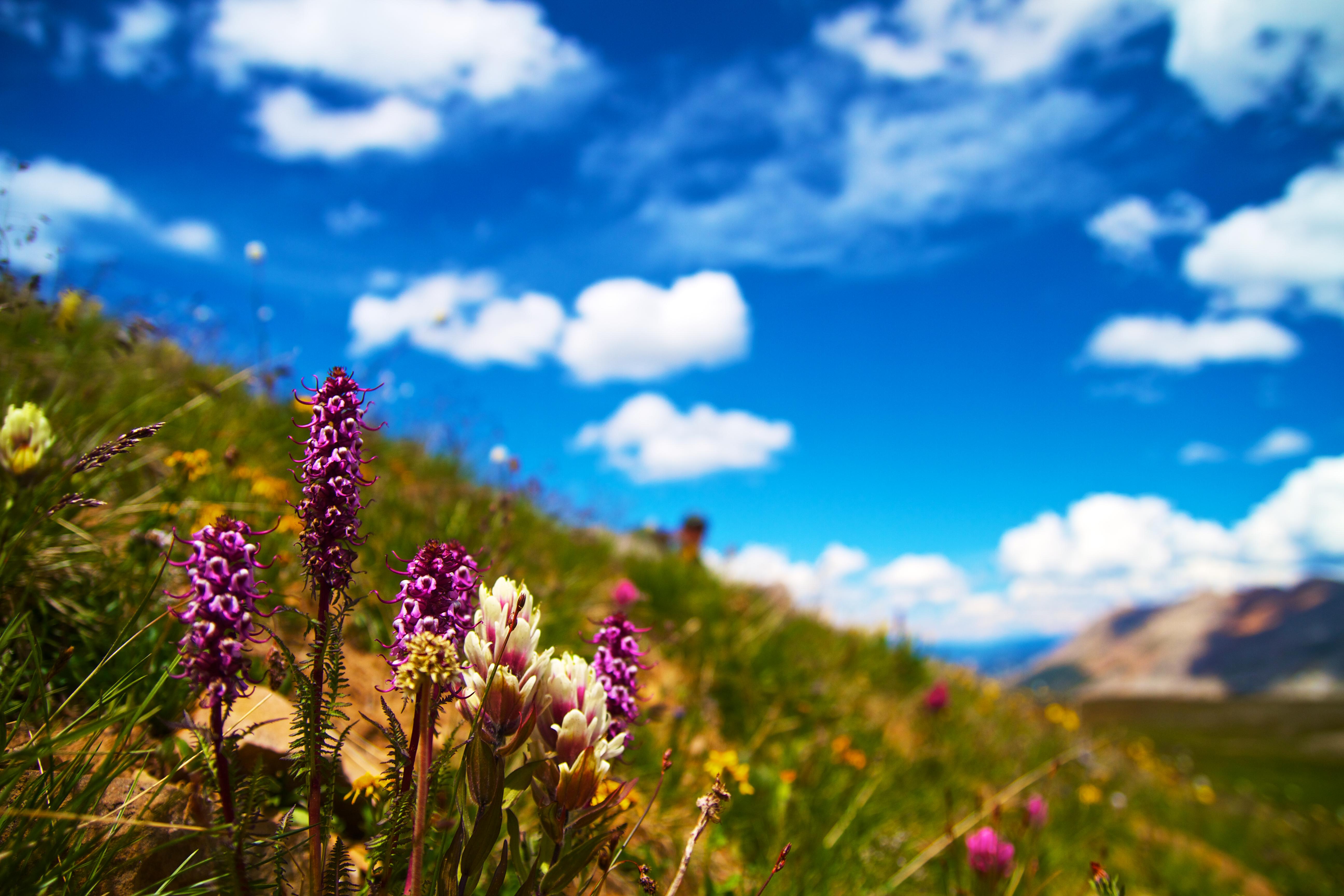 143641 скачать обои Цветение, Цветы, Трава, Лето, Поляна, Полевой - заставки и картинки бесплатно