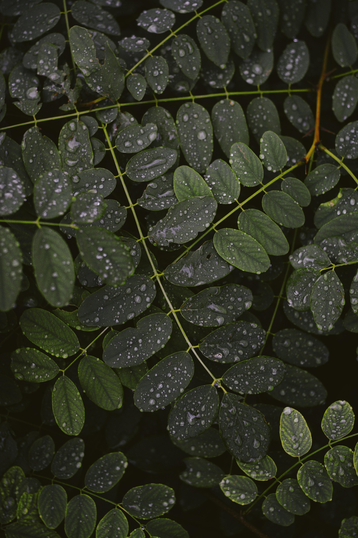155206 скачать обои Макро, Листья, Капли, Ветки, Растение - заставки и картинки бесплатно