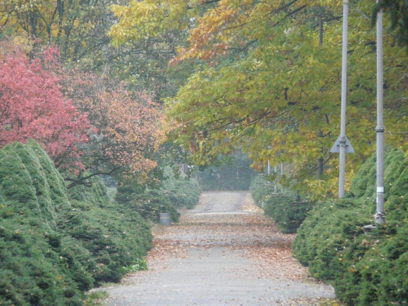 4232 скачать обои Пейзаж, Деревья, Дороги, Осень - заставки и картинки бесплатно