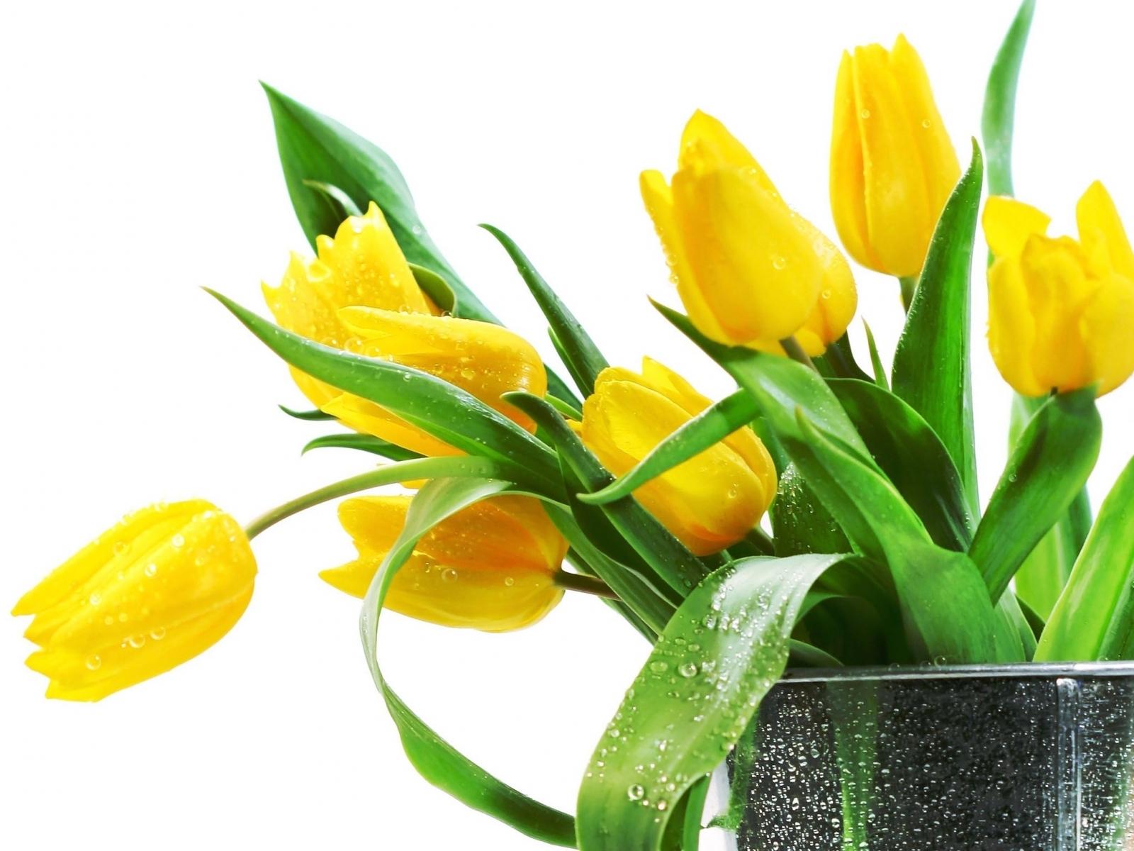 11360 скачать обои Растения, Цветы, Тюльпаны - заставки и картинки бесплатно