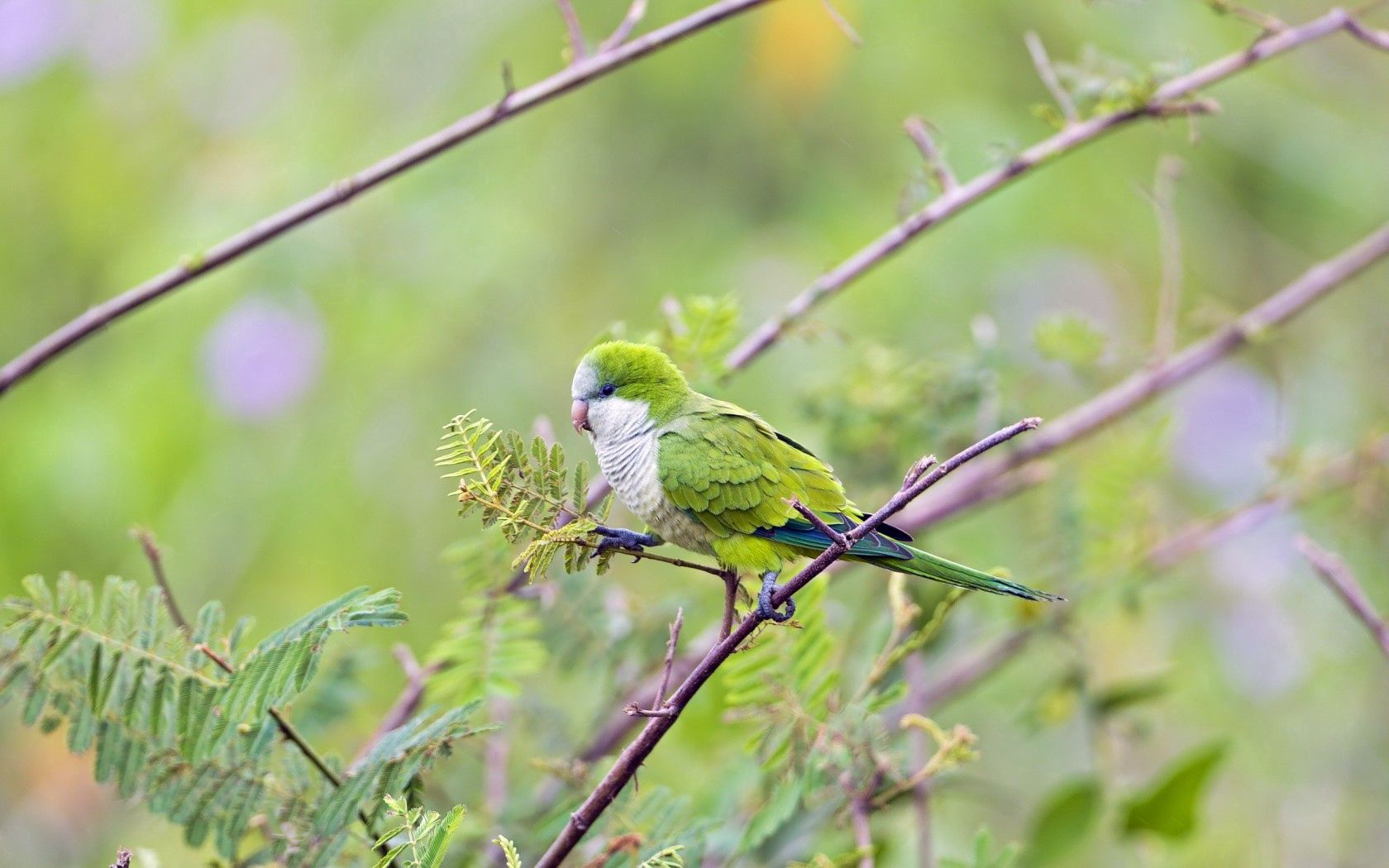 149048 Screensavers and Wallpapers Parrots for phone. Download Parrots, Animals, Bird, Wood, Tree, Branches pictures for free