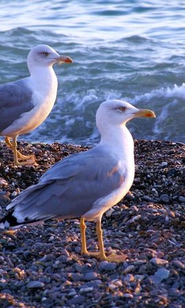 6390 download wallpaper Animals, Birds, Seagulls screensavers and pictures for free