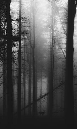 53849携帯電話用の黒壁紙を無料でダウンロード、森林, 森, 霧, 鹿, Bw, Chb, 暗い 黒写真と携帯電話用スクリーンセーバー