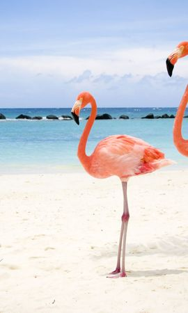 11982 download wallpaper Animals, Birds, Beach, Flamingo screensavers and pictures for free