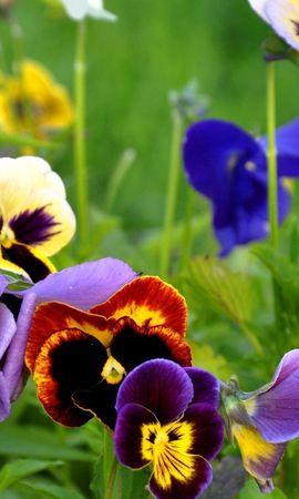 26514 скачать обои Растения, Цветы - заставки и картинки бесплатно