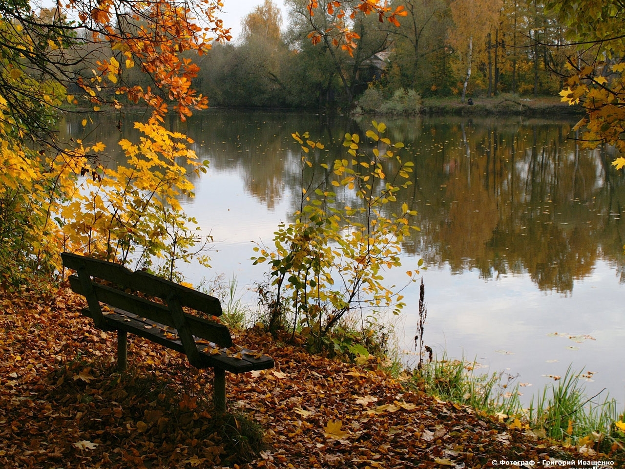 26680 download wallpaper Landscape, Rivers, Trees, Autumn, Leaves screensavers and pictures for free