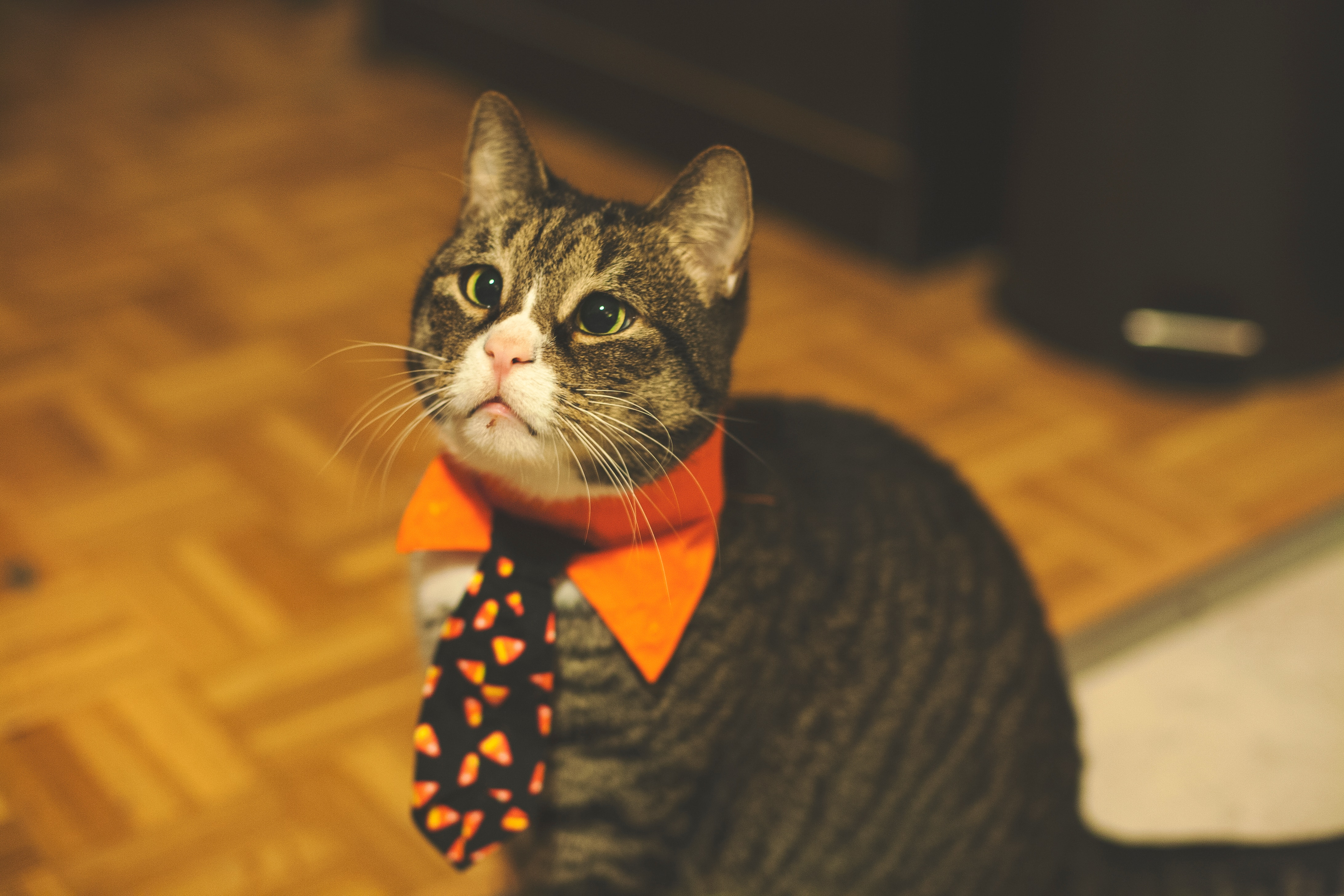 143108 Screensavers and Wallpapers Pet for phone. Download Animals, Cat, Tie, Pet, Funny pictures for free