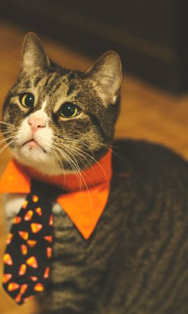 143108 Screensavers and Wallpapers Funny for phone. Download Animals, Cat, Tie, Pet, Funny pictures for free