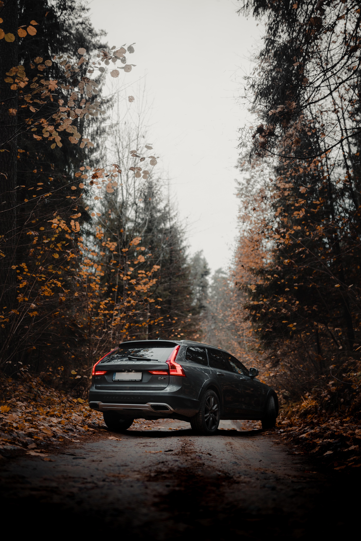 94826 скачать обои Вольво (Volvo), Осень, Тачки (Cars), Лес, Автомобиль, Серый, Volvo V90 - заставки и картинки бесплатно