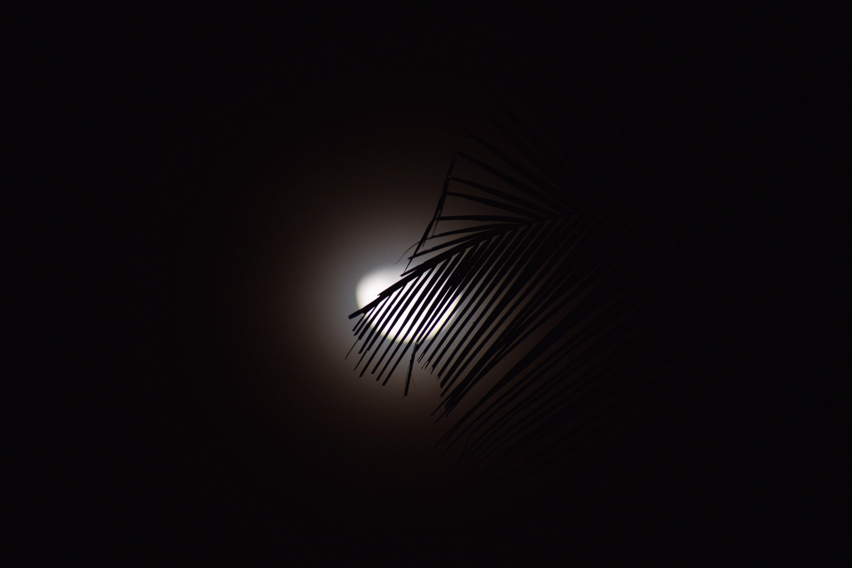 111410 скачать обои Темные, Ветка, Луна, Силуэт, Темный - заставки и картинки бесплатно