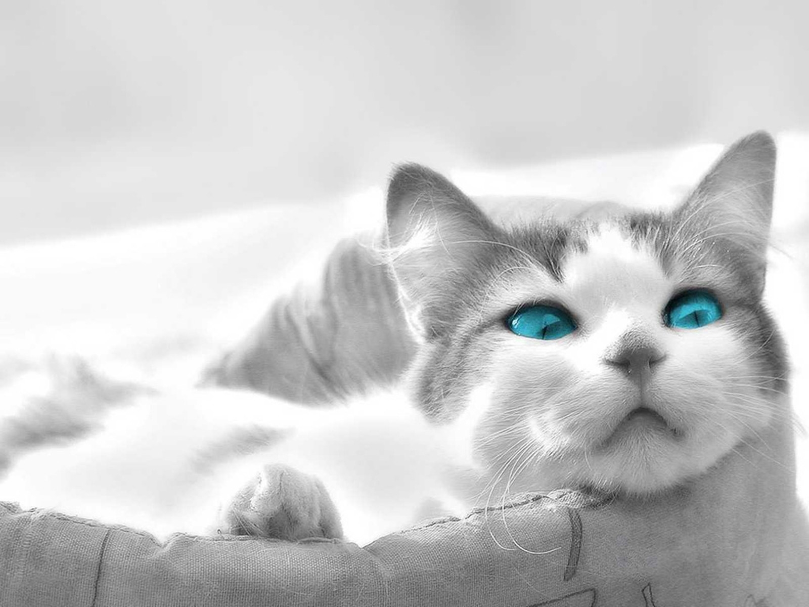 7435 download wallpaper Animals, Cats screensavers and pictures for free