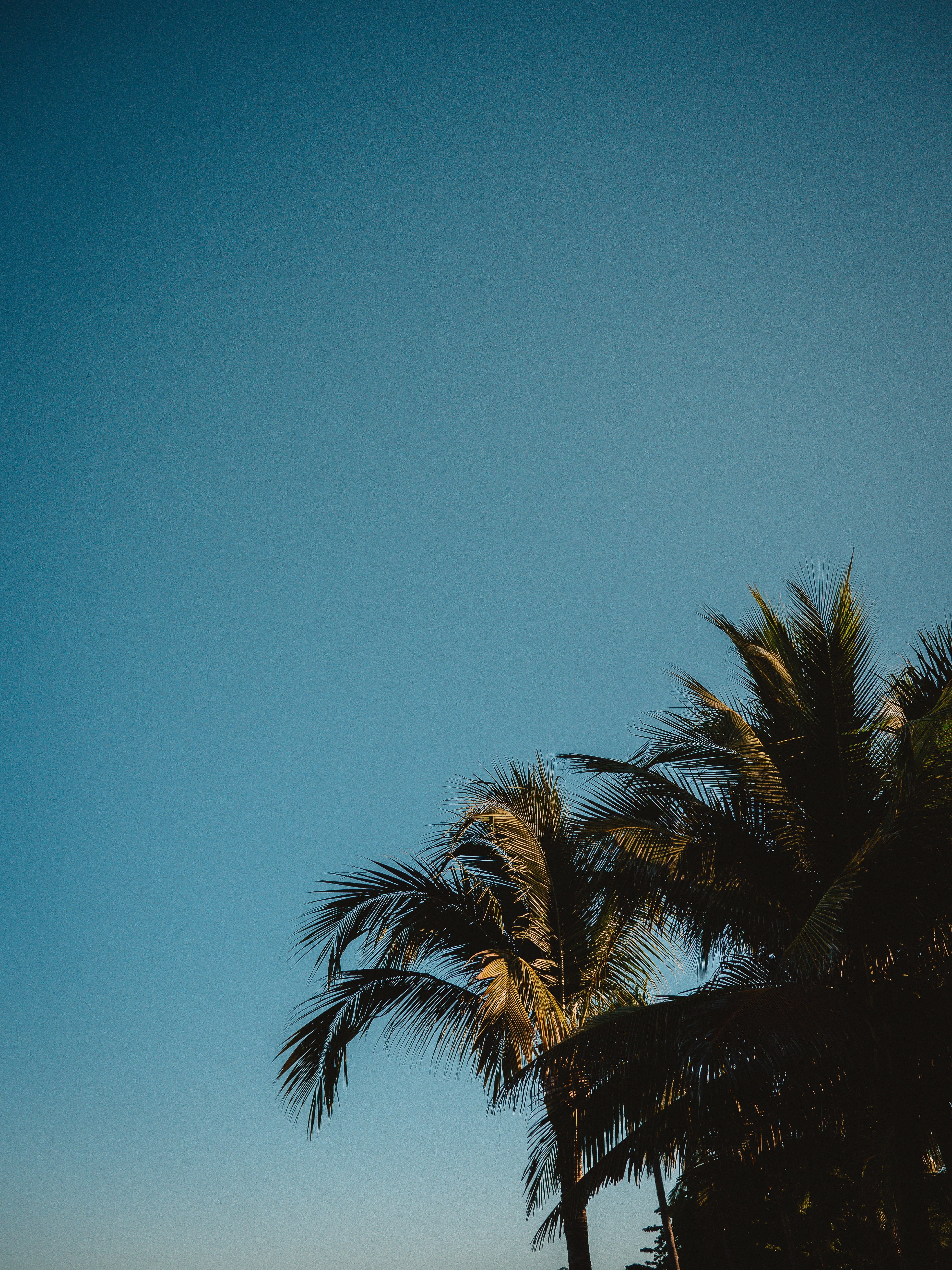 149757 download wallpaper Nature, Tops, Top, Branches, Sky, Tropics, Palms screensavers and pictures for free