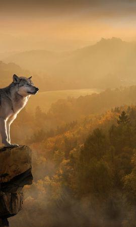 87666 download wallpaper Animals, Wolf, Rock, Break, Precipice, Predator screensavers and pictures for free