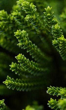 25216 скачать обои Растения, Листья - заставки и картинки бесплатно