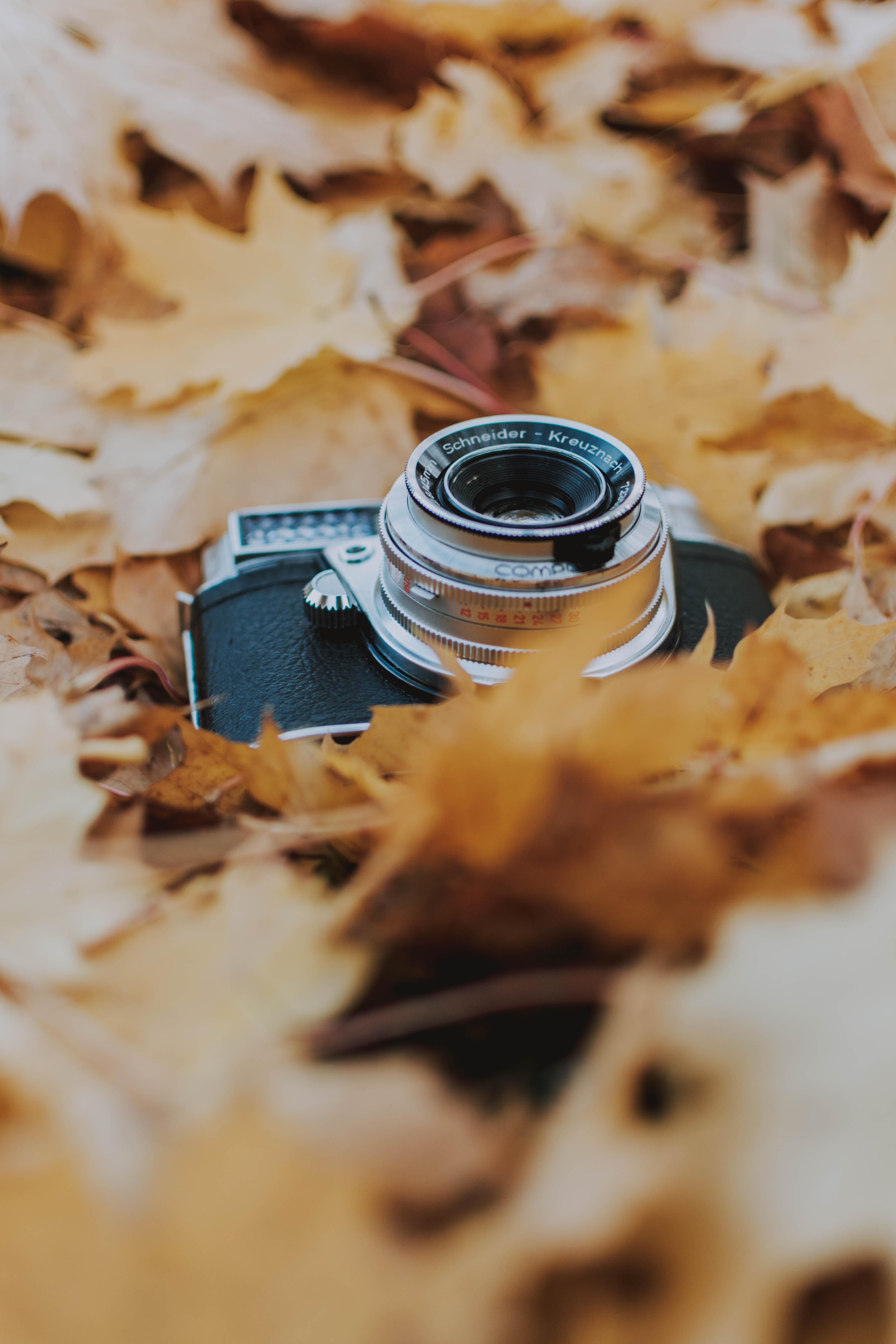 121570 download wallpaper Technologies, Technology, Camera, Leaves, Foliage, Dry, Autumn screensavers and pictures for free
